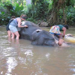 testkozelben_elefantok