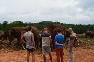 Elefánt árvaházban
