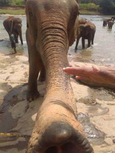 Állatok testközelből, 2.: elefánt (Fotó: Várszegi Eszter)